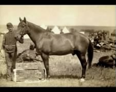 The horse Commanche, the only survivor from Custer's group of men.