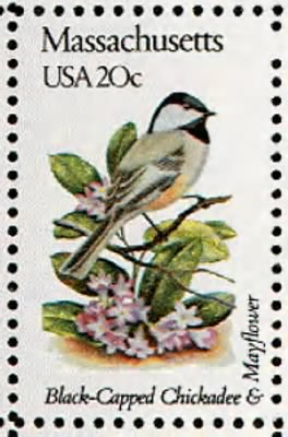 Massachusetts Chickadee.gif